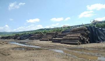 """国家重点研发计划林业专项启动""""竹..."""